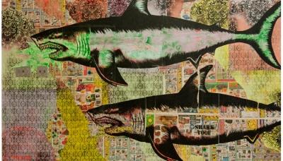 shark 01 (ZERO+)