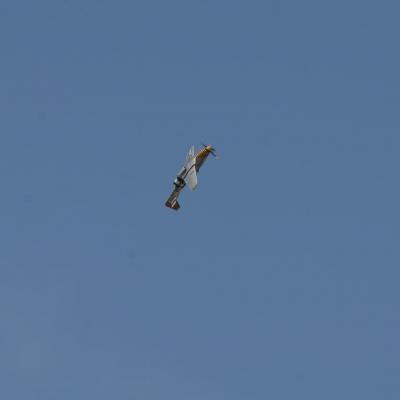 120 Eddie Andreini Airshows