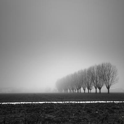 Lines Of Winter