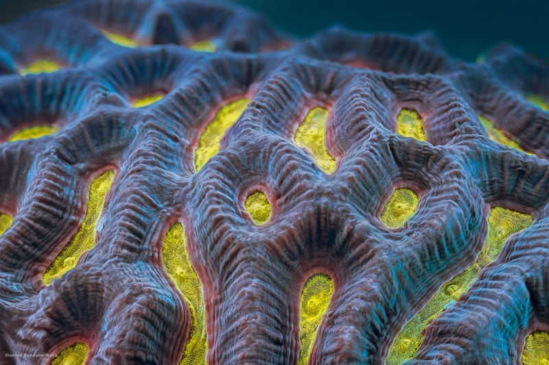 yellow_coral_1280-X2